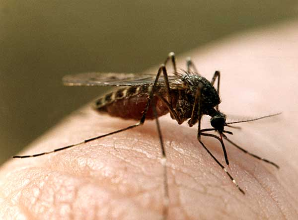 А совсем скоро жаркое лето и надоедливые комары.  Не знаю.